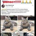 """В Житомирі у районі маслозаводу """"Рудь"""" зникла кішка. ФОТО"""