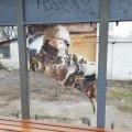 """На декількох зупинках громадського транспорту в Житомирі висять пошкоджені плакати проєкту """" Обличчя миру"""""""