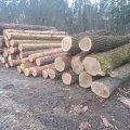 Поблизу чоловічого монастиря на Житомирщині вирубують ліс. ФОТО