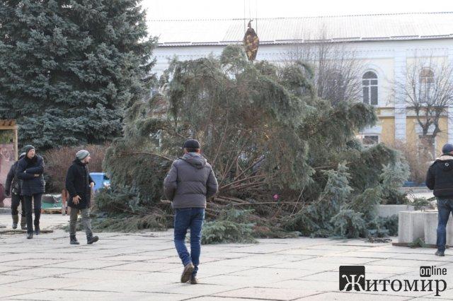 Головну новорічну ялинку Житомира відправлять на утилізацію