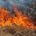 У Радомишлі рятувальники ліквідували загоряння сухої рослинності на площі 1,5 га