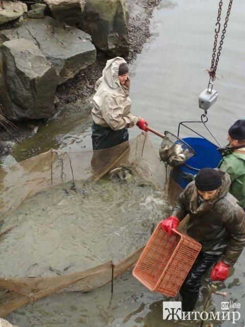 Минулоріч у водойми Житомирщини вселено понад 412 тис. екз. молодої риби