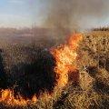 У Коростені рятувальники гасили суху траву, вогонь з якої ледь не перекинувся на кладовище