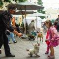 Лялькар з Житомира отримав найвищу оцінку на Всеукраїнському фестивалі вуличного мистецтва