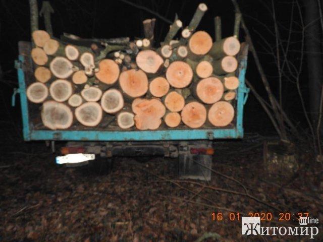 Екологи поблизу села Житомирського району виявили порубку дерев на понад 2 млн грн. ФОТО