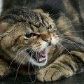 Через скаженого кота в одному з міст Житомирської області ввели карантин