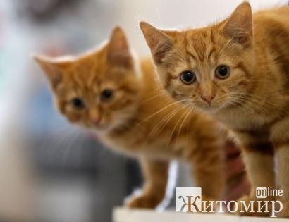 В Житомире на Мазепы неизвестные поджигают котов