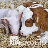 Житомирщина займає 6 місце серед регіонів за темпом виробництва тваринної продукції