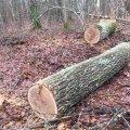 На Житомирщині крадії лісу закидали охоронців світло-шумовими гранатами
