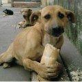 У Житомирі містяни просять вирішити питання з безпритульними тваринами, бо у Центрі ігнорують звернення
