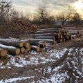 У Олевському лісгоспі та на пилорамах ДБР проводить обшуки: виявили збитків на 6 млн грн і чотирьом лісничим повідомили про підозру в розтраті майна