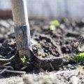 Готуємося до сезону: що потрібно зробити навесні в городі