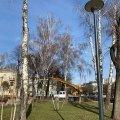У житомирському сквері на Лятошинського кронують дерева. ФОТО