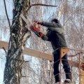 """У """"Зеленбуді"""" житомирянам запропонували заплатити 3 тис. грн, аби зрізати дерево, яке росте за межами приватного будинку"""
