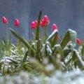 Вихідні лютого у Житомирі будуть теплими і з дощем