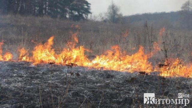 Неподалік Малина горіла суха трава, вогонь знищив 2 га сухотрав'я
