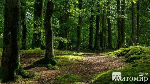 У районах Житомирської області хочуть створити мобільні групи, які проводитимуть рейди лісами