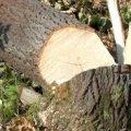 У селищі Житомирської області дерево впало на газопровід