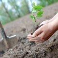 Цього року лісівники Житомирщини планують висадити більше 20 мільйонів дерев