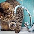 Які райони Житомира сьогодні будуть без води?