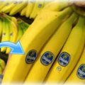 Коли купляєте банани, зверніть увагу на ці наклейки