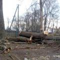 У Житомирській області третьокласник перечепився за гілки, впав та отримав розрив селезінки