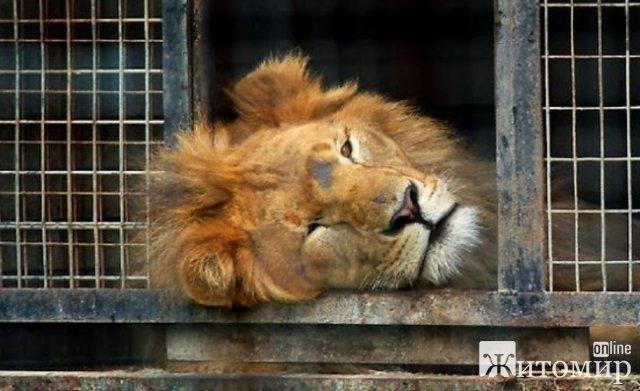 Житомиряни просять заборонити використання тварин у виставах цирків та розміщення їх з тваринами на території міста