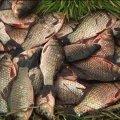 У північних районах Житомирщини рибінспектори вполювали браконьєрів