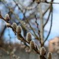 В Украину пришла настоящая весна