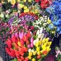 У Житомирі затвердили перелік адрес, де можна буде торгувати квітами та товарами ритуального призначення
