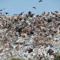 Житомиряни просять владу впорядкувати територію навколо сміттєзвалища