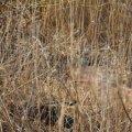 У рівчаку на Крошні виявили тіло житомирянина з ознаками насильницької смерті