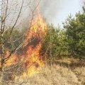Вихідними на Житомирщині понад 300 працівників лісової охорони гасили пожежі