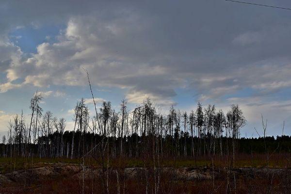 На кордоні з Білоруссю в Житомирській області