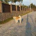Житомирянка розповіла, як сусідський пес врятував її доньку від ротвейлера