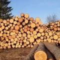 В Андрушівському районі накладено арешт на незаконно зрубані колоди дерев породи вільха, виявлені у місцевого жителя
