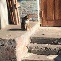 Два житомирські коти з вулиці Гагаріна. ФОТО