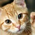 В Бердичеві шахраї дурять згорьованих власників загубленого котика