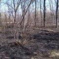 На пустирі у Коростені пожежні гасили загоряння сухої трави і виявили тіло чоловіка та велосипед