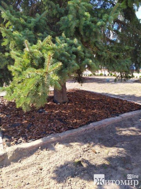 У Житомирській області біля міської ради розпочали роботи з озеленення. ФОТО
