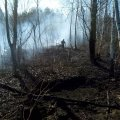 Рятувальники Житомирщини допомагали гасити пожежі в двох лісництвах. ФОТО