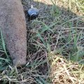 Житомирська область: піротехніки ДСНС області знищили два вибухонебезпечні предмети часів минулих війн