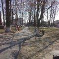 В Україні карантин, а в одному з районів Житомирської області попри заборони білять дерева
