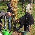 У міському парку Житомира висаджують екзотичні дерева та кущі