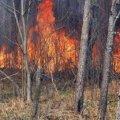 Біда на Овруччині: згорілі ліси, будинки та цілі села