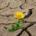 Синоптики різко змінили прогноз на травень в Україні: настане посуха