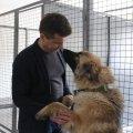 Мер Житомира Сергій Сухомлин взяв під опіку вівчарку з Центру захисту тварин