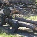 """Лісоруб-""""короїд"""" доїдає ліс у селі поблизу Житомира. ФОТО"""