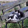 Два житомирські коти з вулиці Фещенка-Чопівського. ФОТО
