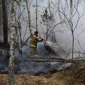 Одна з ОТГ в Житомирській області обіцяє винагороду за інформацію про осіб, які підпалили ліс